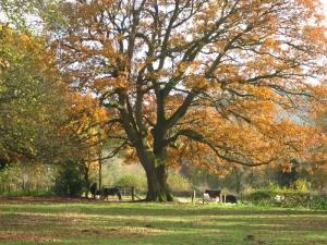 tymawr-convent-grounds-garden05